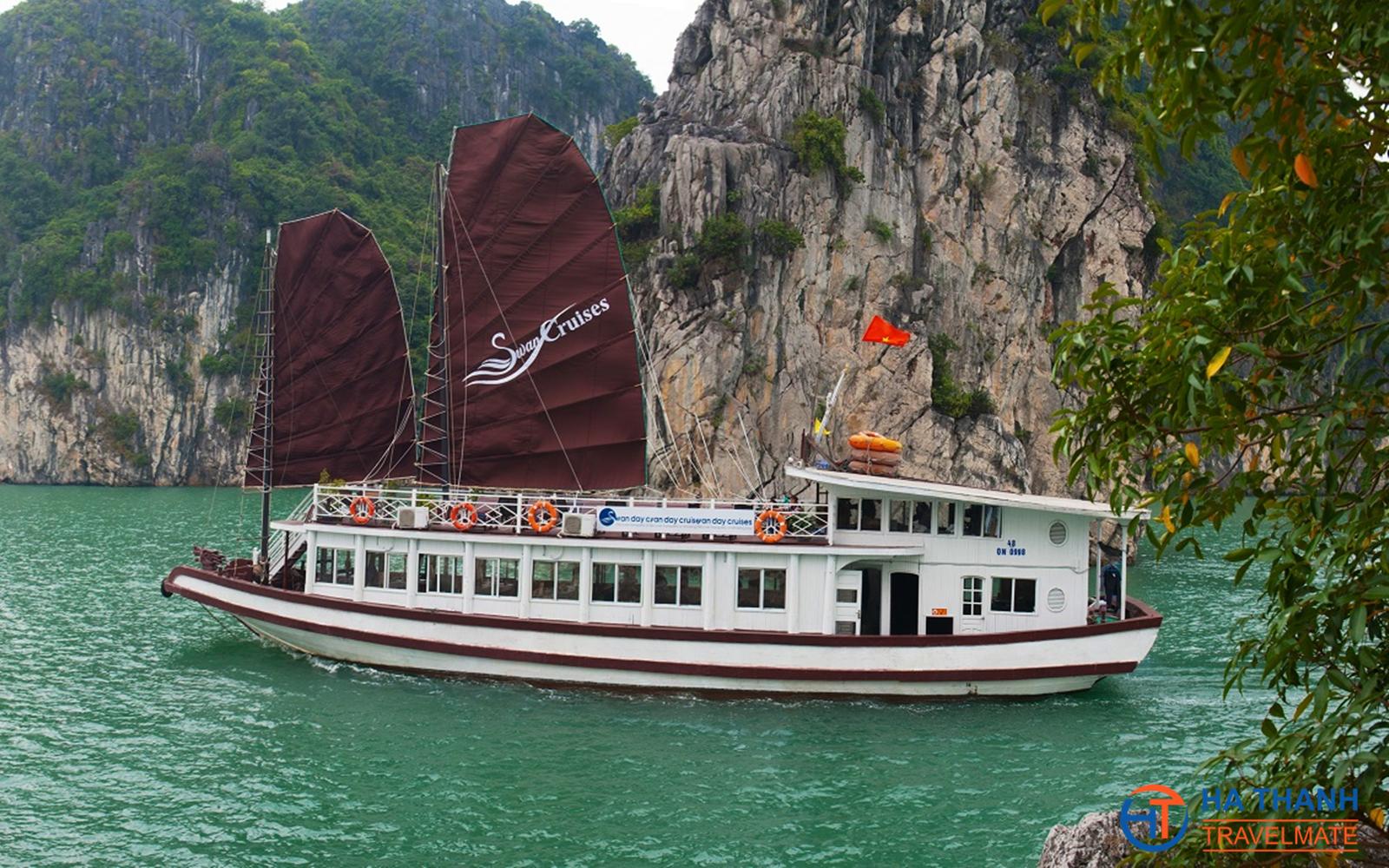 Swan Day Cruise