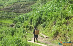 Sapa Trekking 3 days/2 nights Tour – Homestay