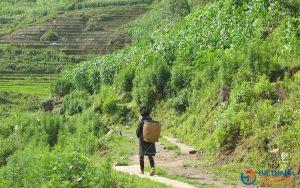 Sapa Trekking 3 days/2 nights Tour – Homestay
